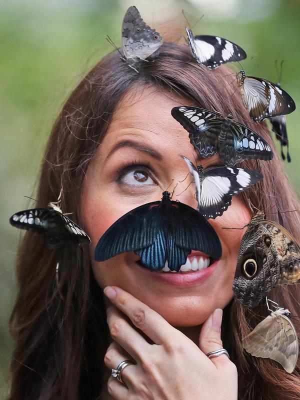 Seorang wanita bernama Jessie berpose saat wajahnya dipenuhi kupu-kupu dalam sesi foto di Wisley Gardens, Inggris (12/1). Ditempat ini kupu-kupu beraneka jenis dan spesies dijaga dan dibiarkan terbang bebas. (AP Photo / Frank Augstein)