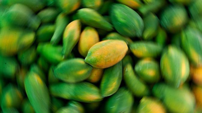Buah pepaya yang masih hijau dapat dimanfaatkan untuk memutihkan ketiak yang hitam. Caranya dengan memarut pepaya muda tersebut hingga halus, lalu oleskan pada area kulit ketiak dan diamkan selama 10 menit kemudian bilas dengan air bersih. (AFP Photo)