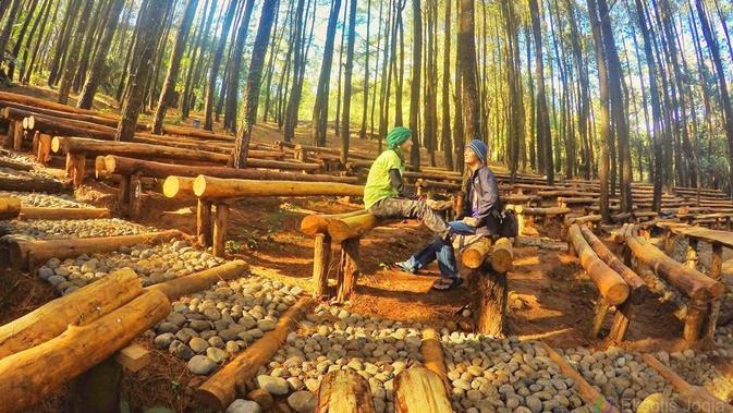 Hutan Pinus Mangunan (eksotisjogja.com)