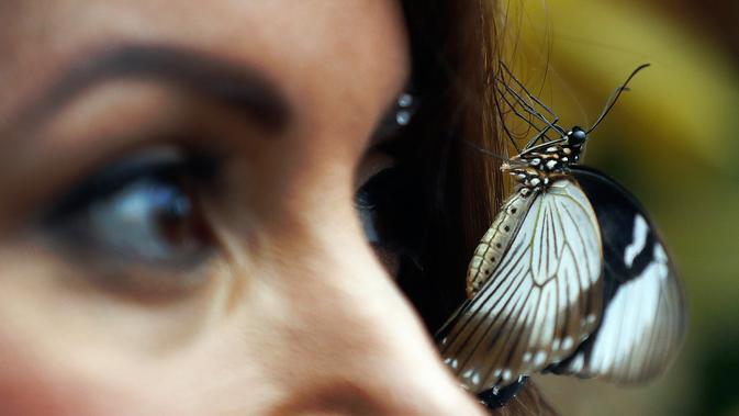 Seekor kupu-kupu hinggap di wajah Jessie saat sesi foto di Wisley Gardens, Inggris (12/1). Ditempat ini kupu-kupu beraneka jenis dan spesies dijaga dan dibiarkan terbang bebas. (AP Photo / Frank Augstein)